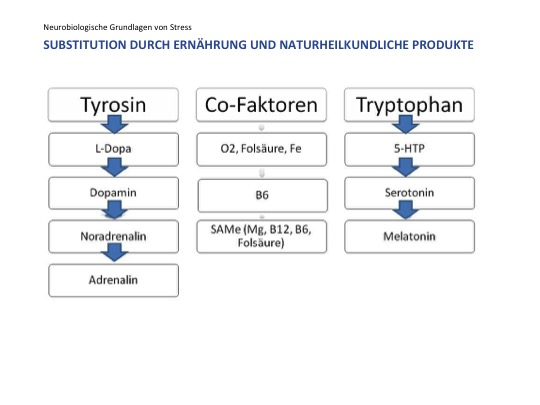6_Aminosäuren und Cofaktoren